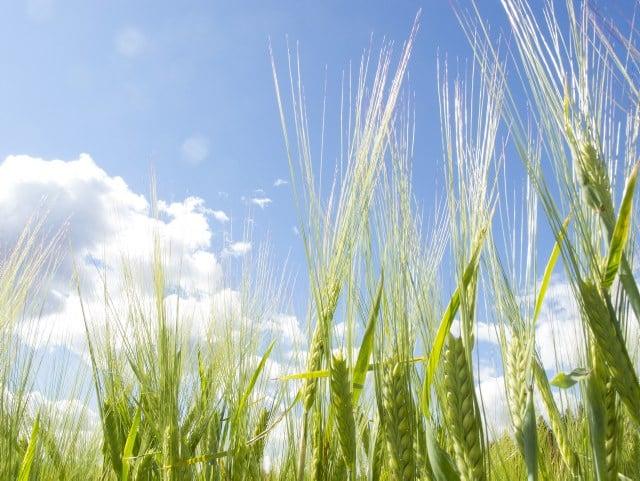 Qu'est-ce qui se développe dans les champs?
